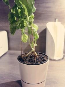 pflanzen-urlaub_3