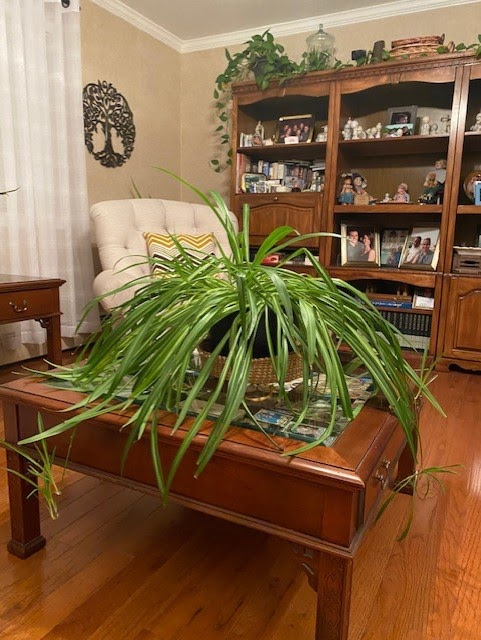 House plant Jill Fritz Sibcy Cline West Chester