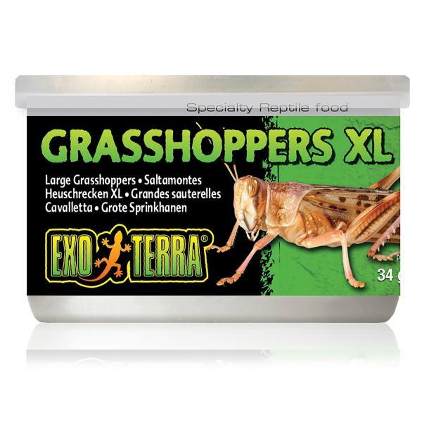 Exo Terra Grasshoppers 34g|XL (34g)