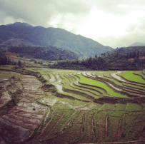 Sapa rice paddy terraces