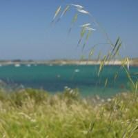 L'Archipel de la Manche - L'Herbe
