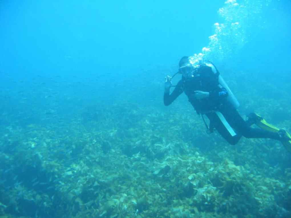 Diving off the coast of New Zealand. Photo courtesy of Dressed.