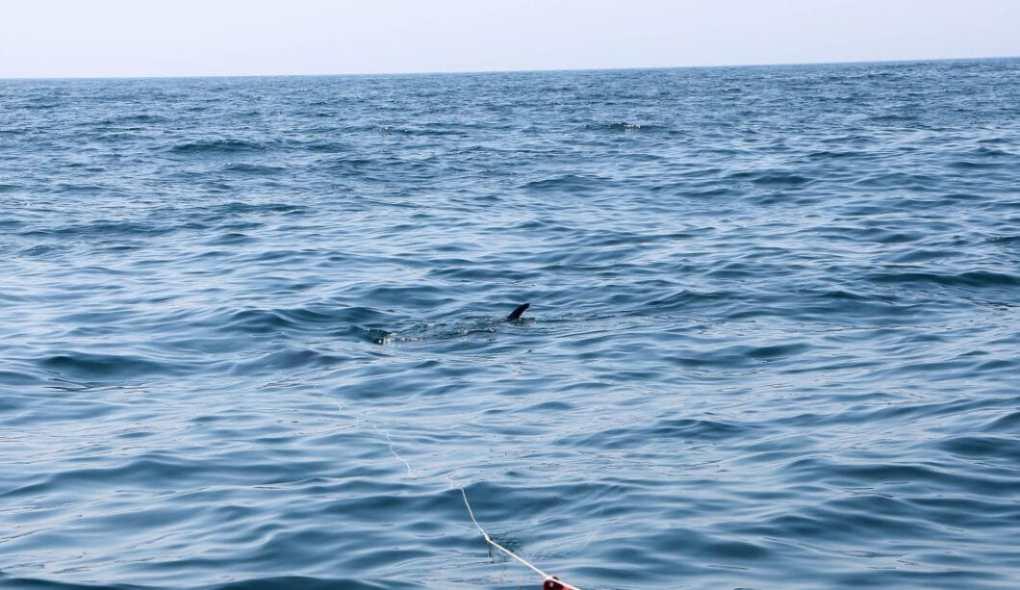 Shark fin!