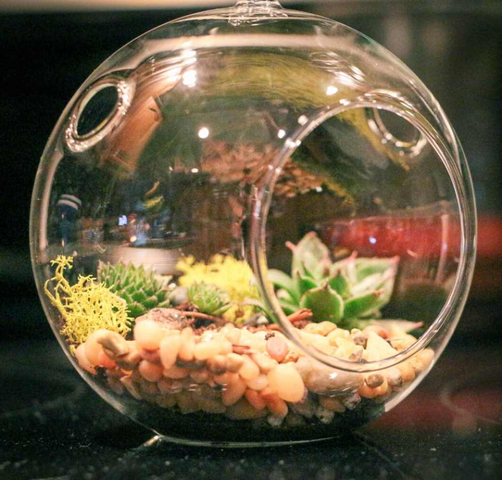 how to make terrarium