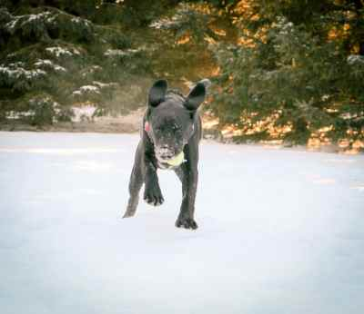 puppy playing fetch in the snow