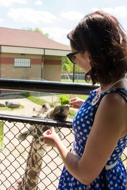 NEW Zoo giraffe