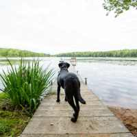 Black Lab & Dock in Wisconsin