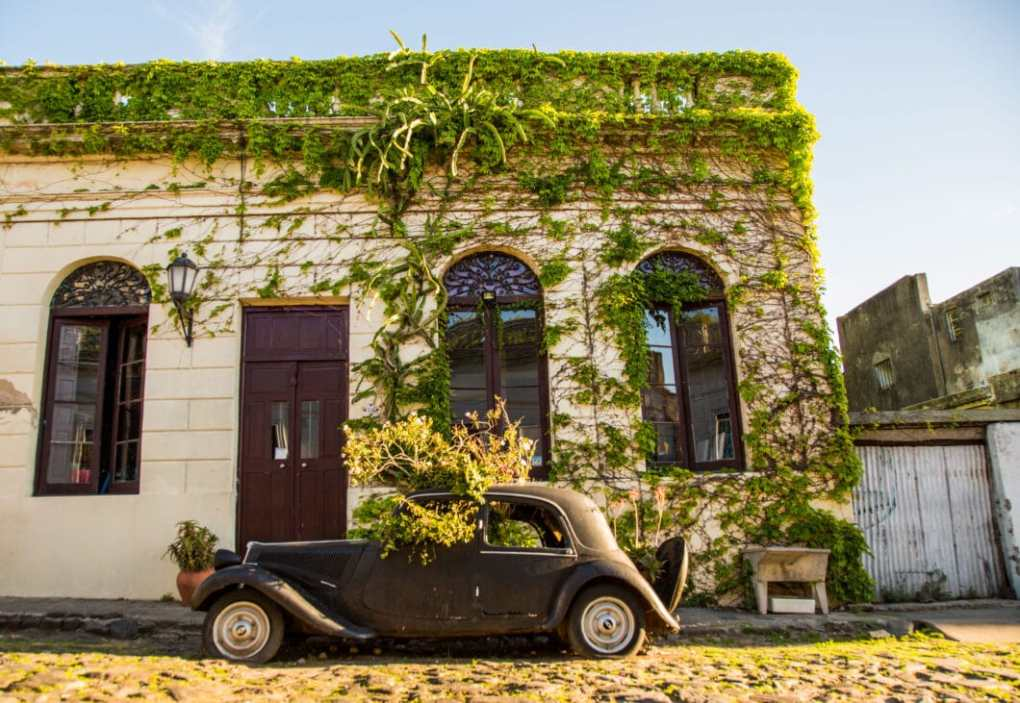 Colonia del Sacramento old car with flowers growing out of it