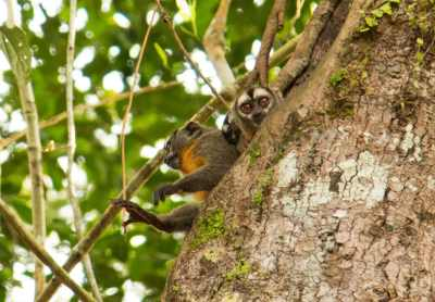 monkeys amazon rainforest