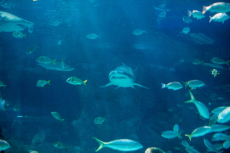 Ripley's Aquarium of Myrtle Beach Review