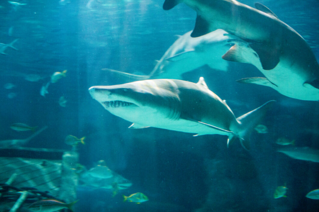 ripley s aquarium of myrtle beach review have clothes will
