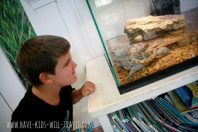 Coastal Discovery Museum Web 2