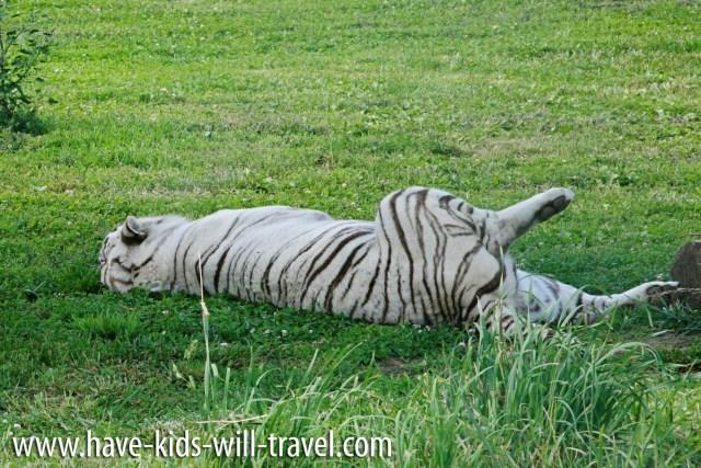 VA Safari Park 14