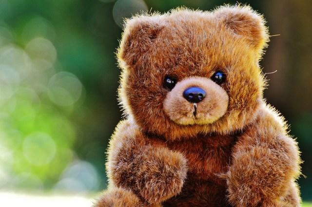 bear-1295092_960_720