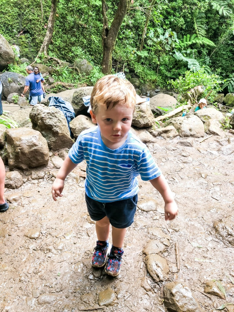 What you need to know about hiking the Manoa Falls Trail. Head on over to the blog to check out all my tips. #manoafalls #manoafallstrail #hikingoahu #oahuhikes