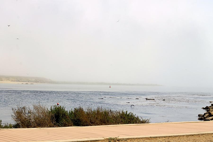 Morro Bay-Sea Otters