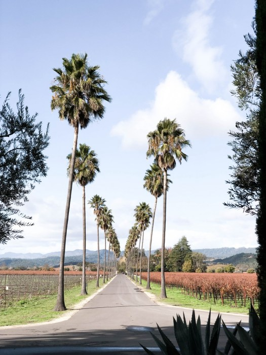 Wine Tasting and Foodie Trip in Yountville CA | Have Need Want
