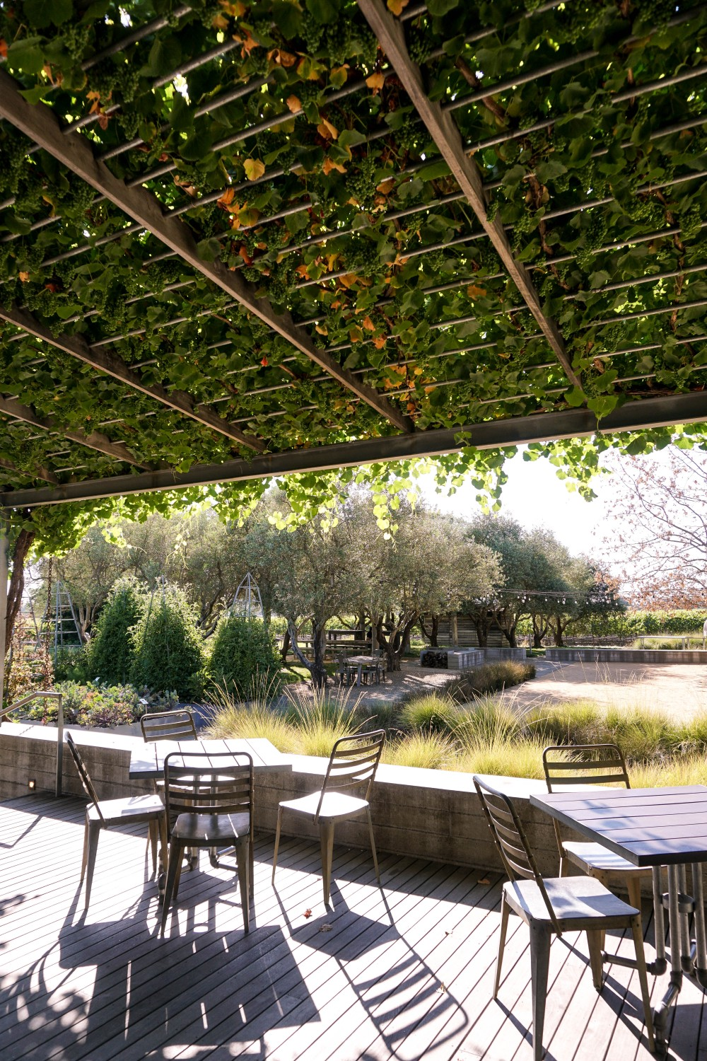 Wine Tasting in Healdsburg-Medlock Ames Winery-Food and Wine-Wine and Cheese-Wine Tasting-Wine Country-Have Need Want 4