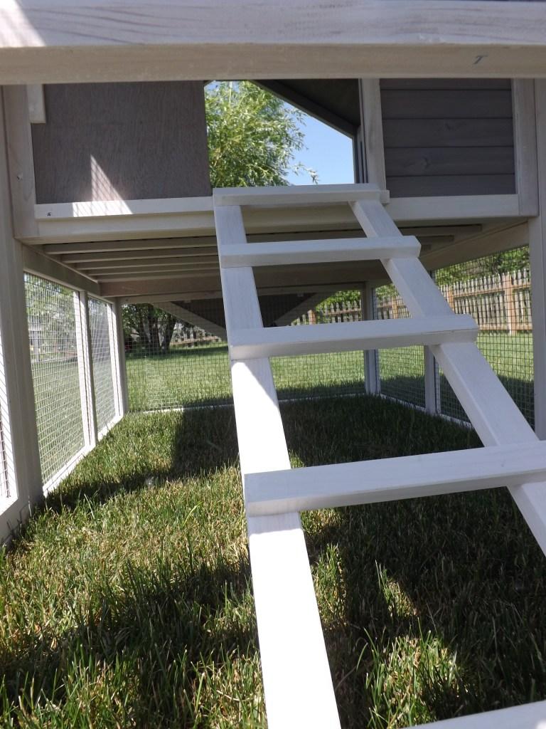 Ladder in Coop