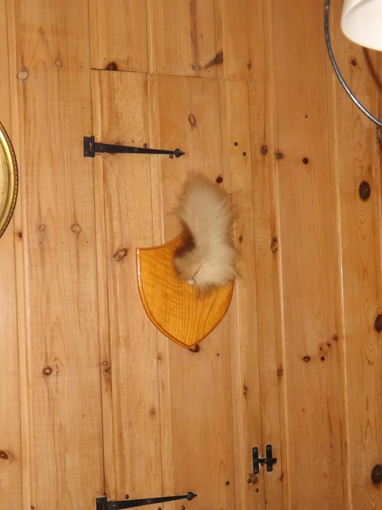Deer Tail on Wall