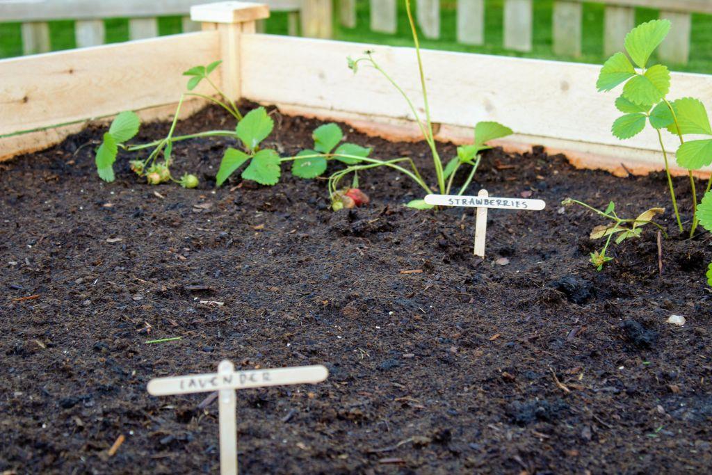 Planting a Backyard Garden
