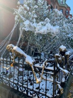 Skeltons covered in Snow