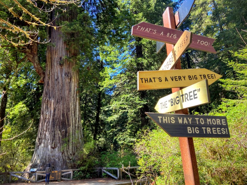 A sign post near a coast redwood points in every direction to find big trees.