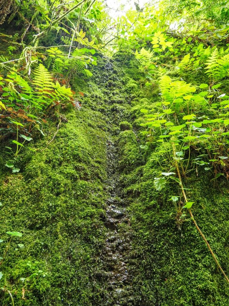 High narrow cascade on mossy wall