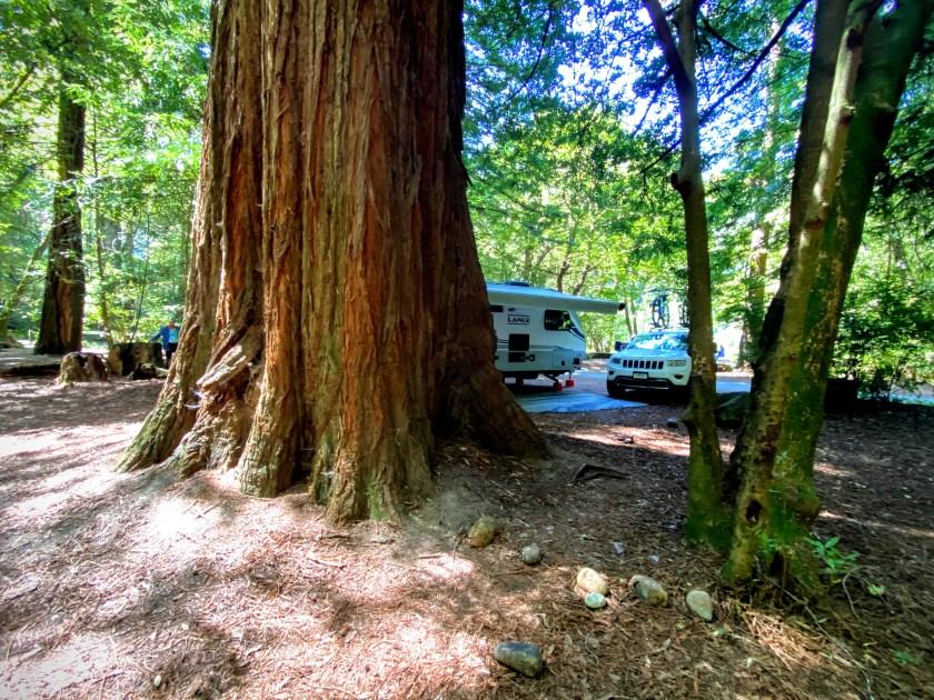 Redwood tree campsite