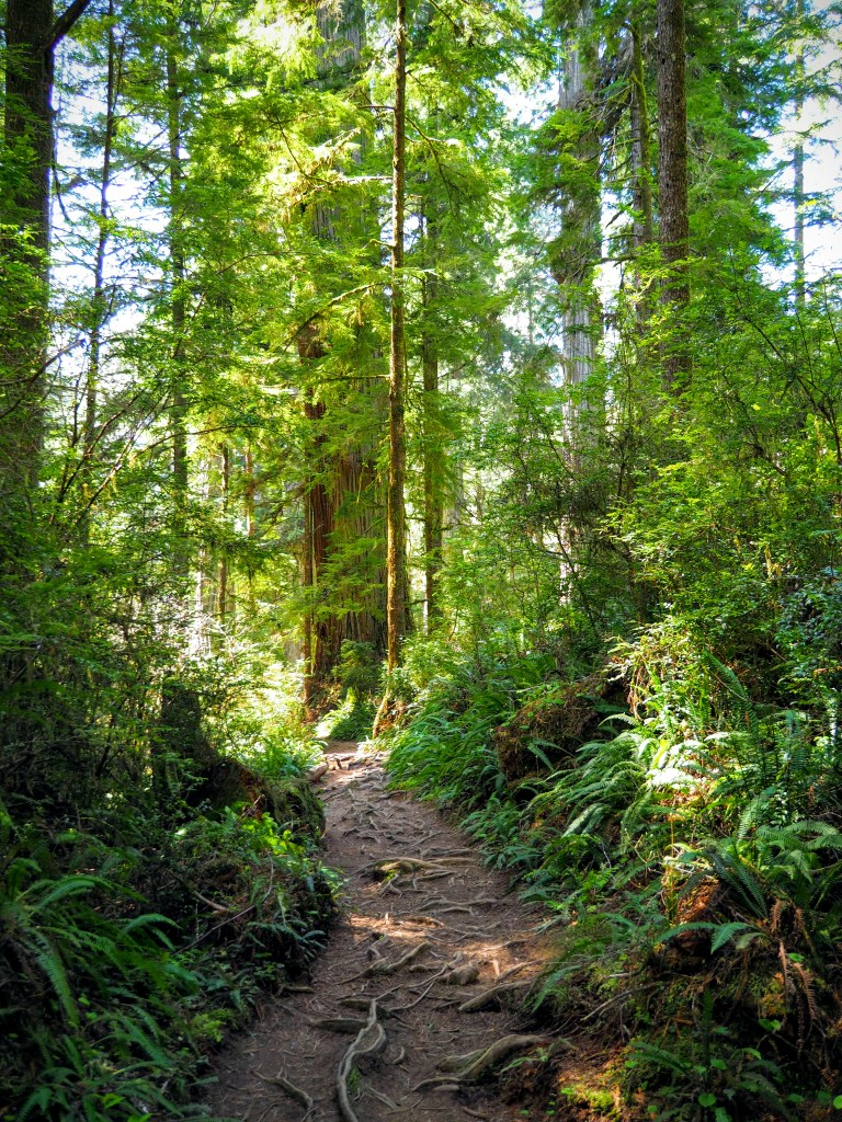 Roots on the trail threaten to trip hikers whose attention strays.