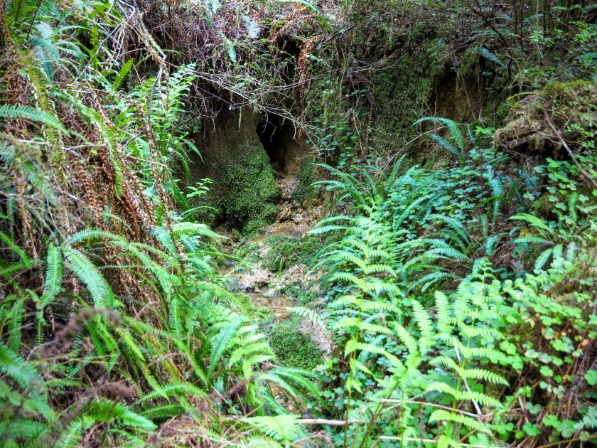 A wet sandy otter hole in the mossy forest
