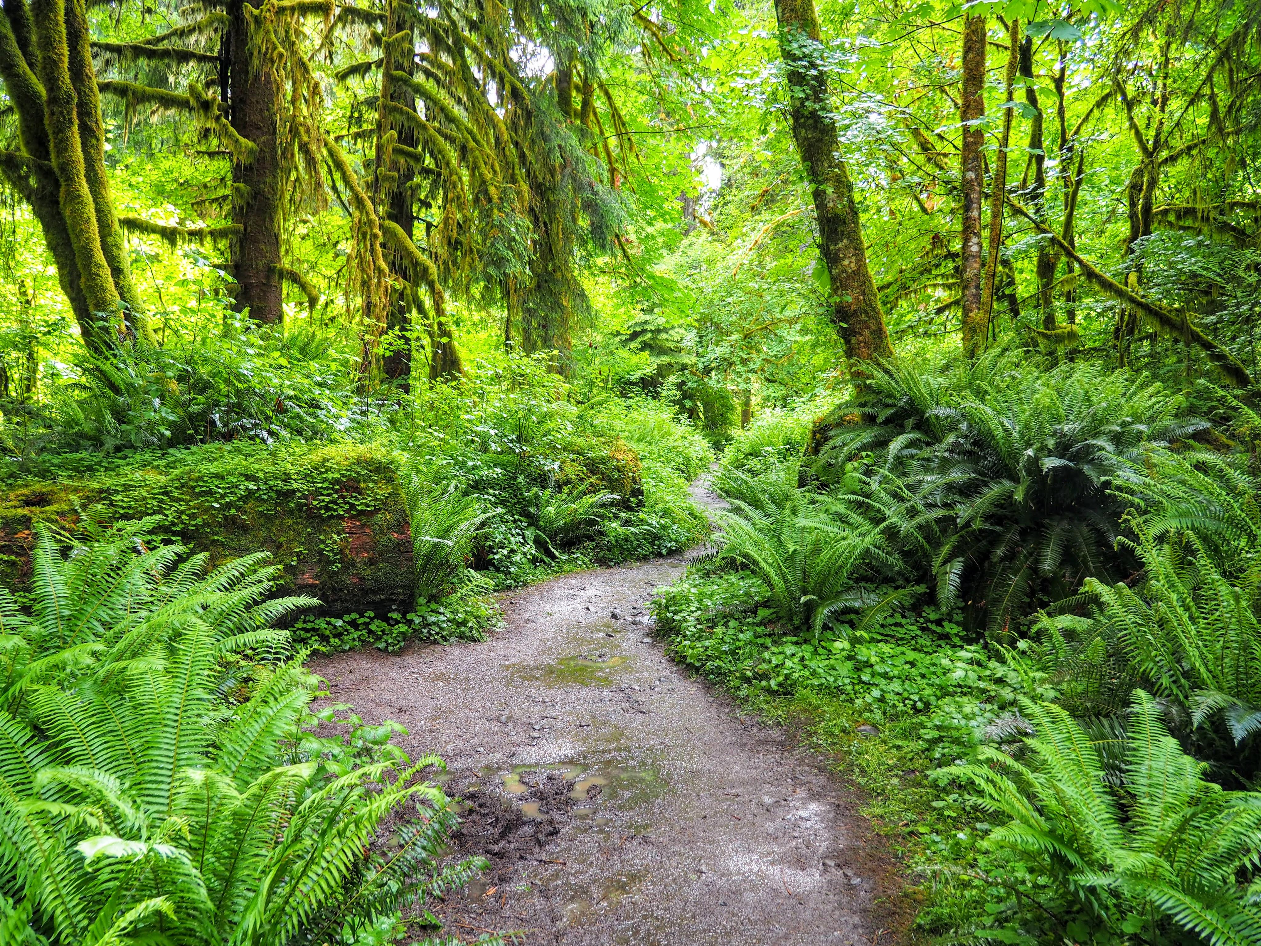 Olympic National Park – Hoh Rainforest