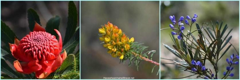 Collagewildflowers