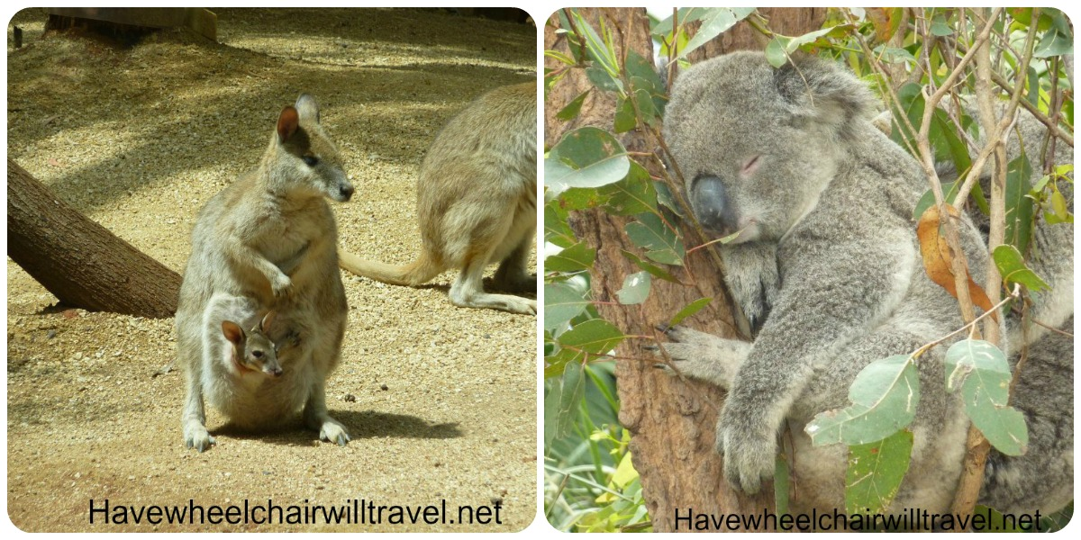 wildlife sydney collage