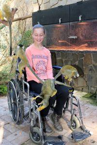 Adelaide Zoo - wheelchair access.