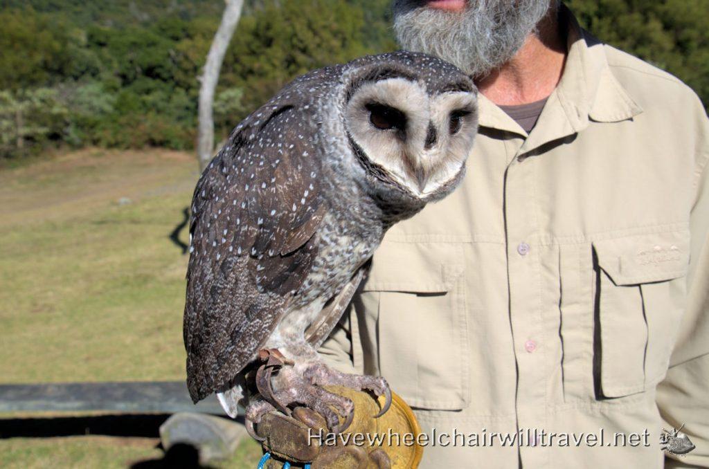 Birds of Prey Show O'Reilly's Rainforest Retreat