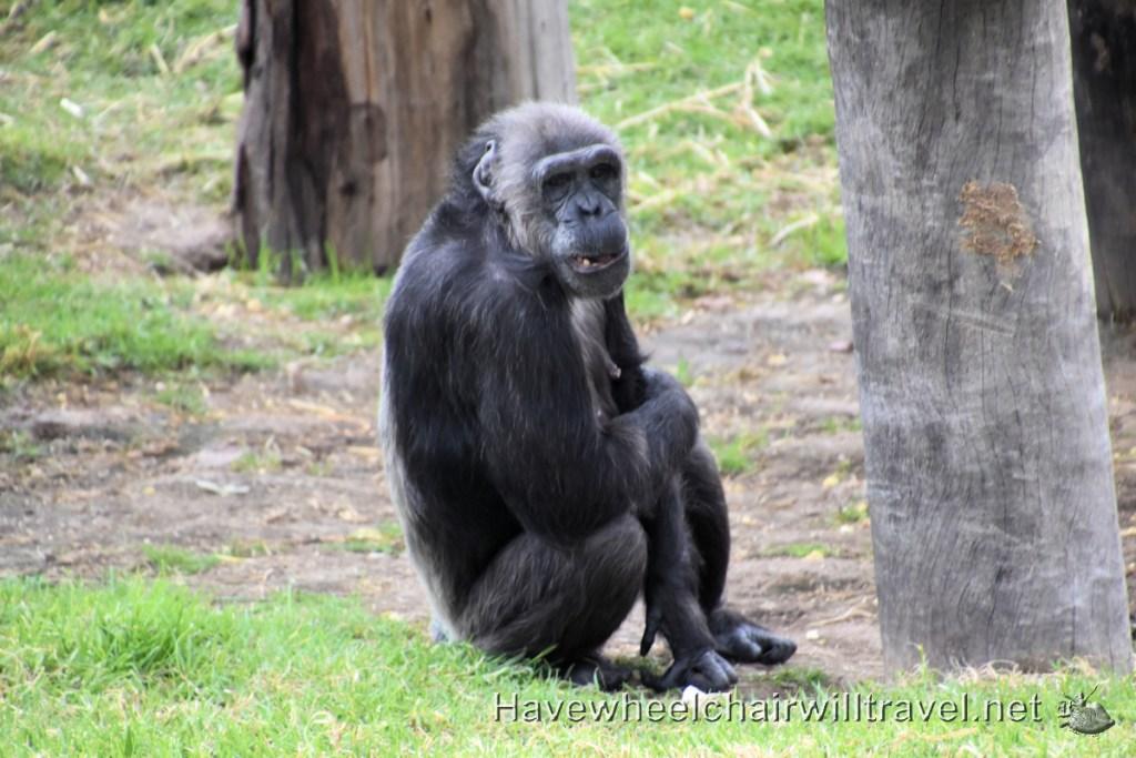 Sydney Zoo - Western Sydney - Accessible Sydney - Have Wheelchair Will Travel
