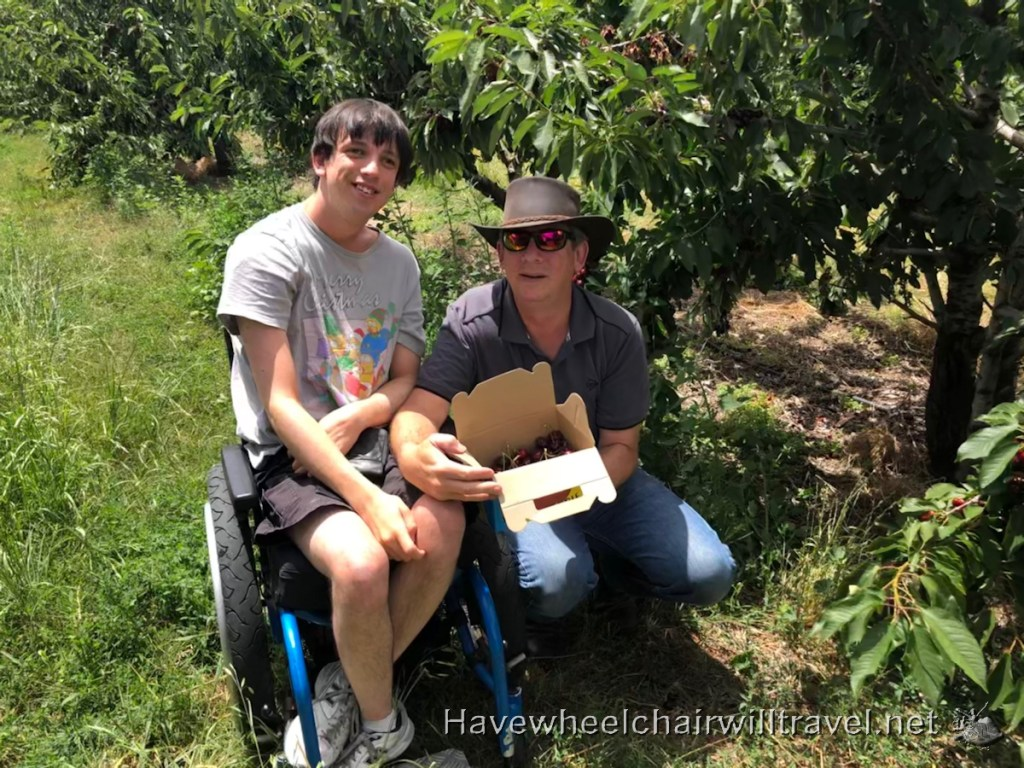 Cherry picking young - accessible fruit picking - Have Wheelchair Will Travel