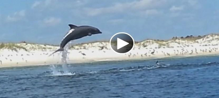 #18: SeaWorld's Got Nothing on Pensacola