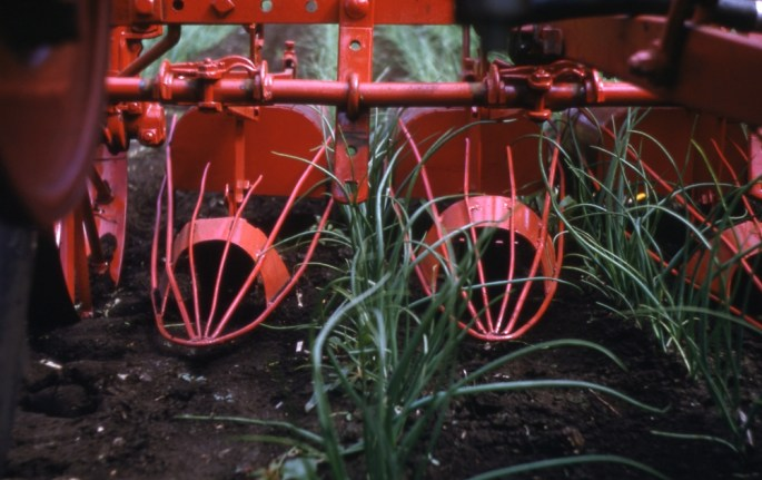 Close up of onion cultivator