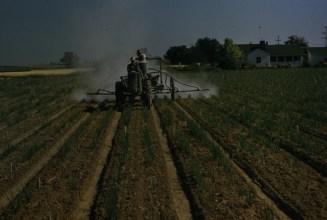 Dusting onions Parma 1958