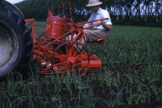 Onion cultivator (2)