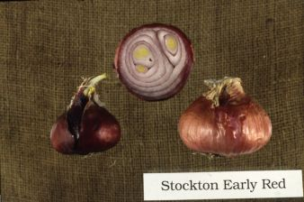 Stockton Early Red