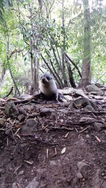 seal on hill