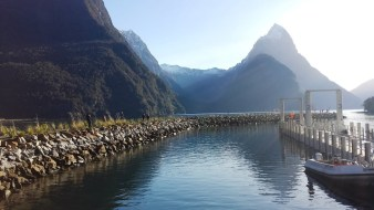 milford-sound-harbor