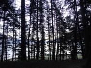 Queenstown forest