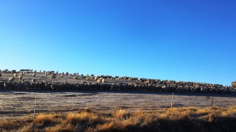 lake-alexandrina-sheep