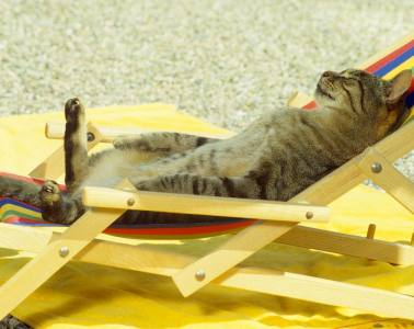 chat-chill-max