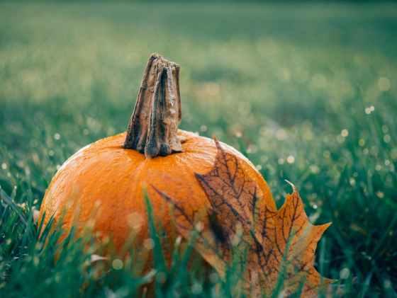 autumn decoration fall field