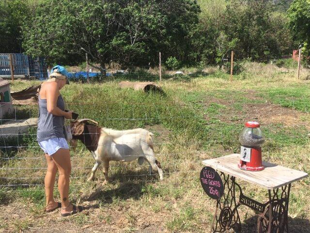 ワイマナロでひまわり畑